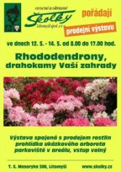 Rhododendrony - drahokamy Vaší zahrady