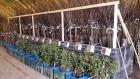 Prodej ovocných stromků a růží